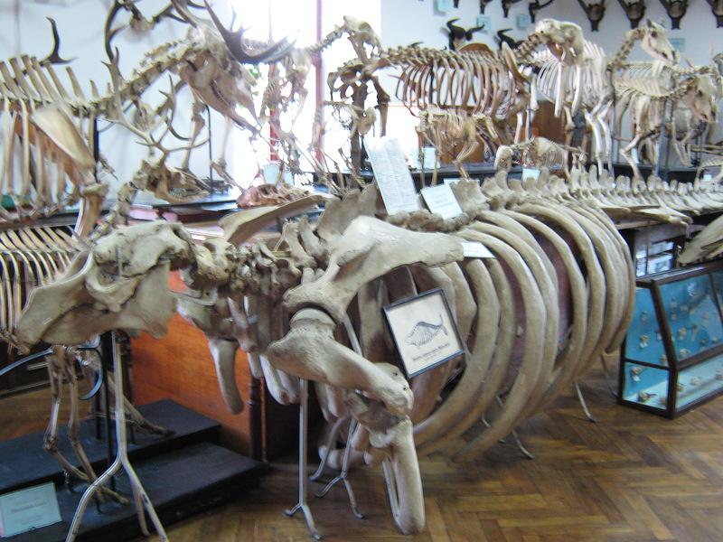 Деякі експонати є унікальними, нових дістати вже не вийде, по причині відсутності їх джерела – морської корови, яка вже вся вибита начисто