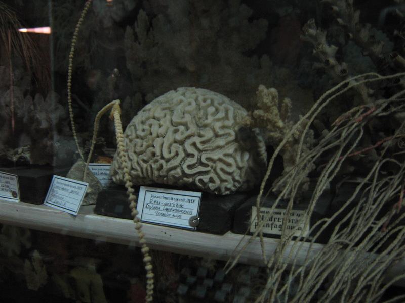 Насправді то корал-мозговик.