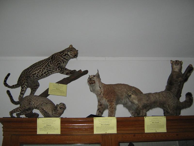 Інші котячі