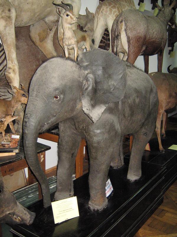 Слоника замордували...